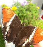 Buterfly Photos libres de droits
