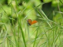Buterfly dans le jardin Images libres de droits