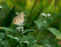 Buterfly dans le jardin Photographie stock