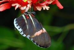 Buterfly en una orquídea fotos de archivo