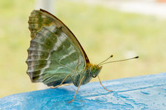 Buterfly Stock Images