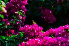 Buterfly und mediteranean Blume des Rosas Stockfotos