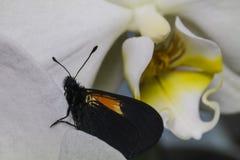 Buterfly y la orquídea Foto de archivo libre de regalías