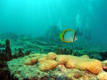 buterflyfishl潜水员 免版税库存照片