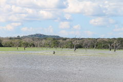 Buthawa Wewa sjö, Yala strikt naturreserv Royaltyfria Foton