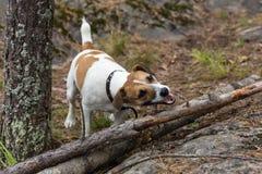 Butin en bois Photographie stock libre de droits