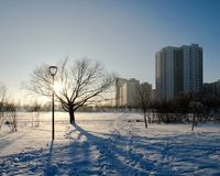 Butovo Moscow winter and lonely tree royalty free stock photography