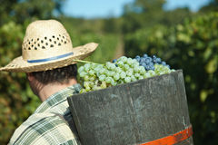 full of grapes Stock Photo