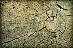 Butt of old log with cracks Royalty Free Stock Photography