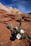 Butte et fleur en pierre Photographie stock libre de droits