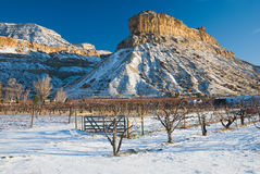 Butte and Vineyard Royalty Free Stock Photo
