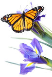 Buttefly auf Blumen Stockfoto