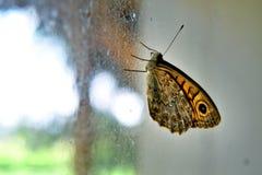 Buttefly met zwart, bruin en geel patroon in ondiepe diepte van gebied Royalty-vrije Stock Afbeelding