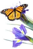 Buttefly op bloemen stock foto