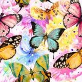Buttefly tło Zdjęcia Stock