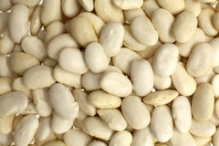 Butter Beans Royalty Free Stock Photos