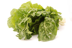 Butter or Boston Bibb Lettuce Royalty Free Stock Photos