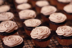 Butter cream frosted cupcakes on rack - ready for party / celebration Stock Images
