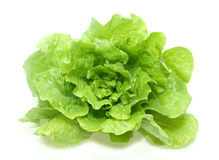 Butter green lettuce Stock Image