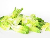 Butter lettuce Stock Image