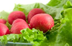 Butter Lettuce and radish. A frash Butter Lettuce and radish over dish Royalty Free Stock Photo