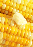 Butter melting on fresh picked corn on the cob Royalty Free Stock Images