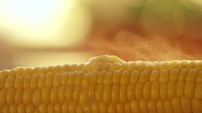 Butter melting on hot freshly boiled corn Royalty Free Stock Image