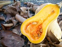 Butter nut squash Royalty Free Stock Photography