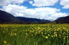 Butterblume-Berge Lizenzfreies Stockfoto
