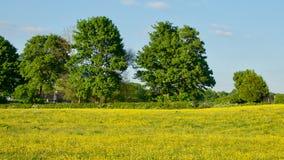 Butterblumeen mit grünen Bäumen und blauem Himmel Stockfoto
