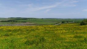 Butterblumefeld in Nationalpark Süd- West-England Dartmoor Lizenzfreies Stockfoto