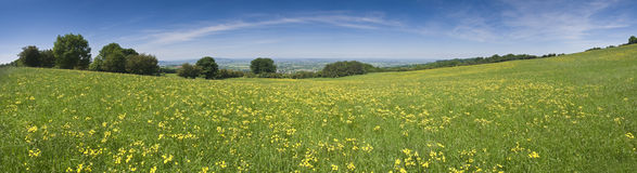 Buttercup field, rural landscape Royalty Free Stock Photos
