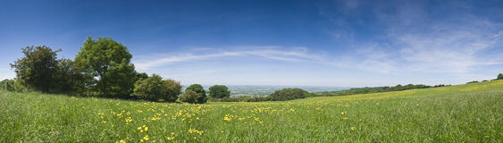 Buttercup field, rural landscape. Big wide lush green meadow carpeted in fresh buttercups Royalty Free Stock Photography