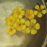 Buttercup floating. Yellow flowers floationg on a tibetan bowl Royalty Free Stock Images