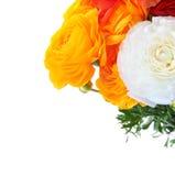 Buttercup flowers bouquet Stock Photo