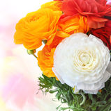 Buttercup flowers bouquet Royalty Free Stock Images