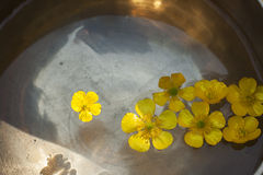 Free Buttercup Flowers Floating In A Tibetan Bowl Stock Photos - 57465313