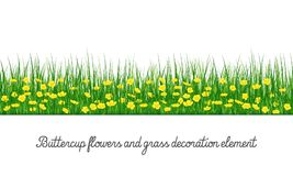 Buttercup and Grass Decoration Element royalty free stock image