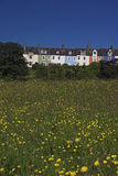 Buttercup houses. Colourful houses and buttercup field royalty free stock image