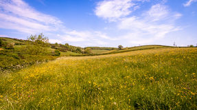 Buttercup Meadow. Part of the beautiful West Country. A view across the valley with the field in the foreground left fallow allowing the wild meadow flowers Stock Image