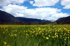 Buttercup Mountains Royalty Free Stock Photo