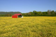 Buttercup Pasture Stock Photo