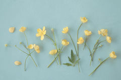 Buttercup2 Royalty Free Stock Photo