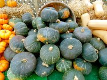 Buttercup Squash Stock Photography