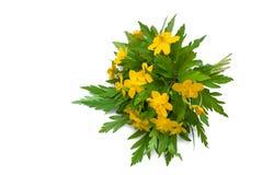 buttercups Imagens de Stock Royalty Free