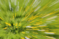 Buttercups in a Field - Abstract Zooming Background. Zooming in on yellow buttercups in a field taken with a long exposure royalty free stock photography