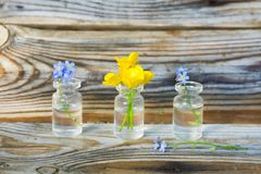 buttercups and forget-me-nots in small glass jars. stock photos