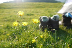 Buttercups and hikers Royalty Free Stock Photo