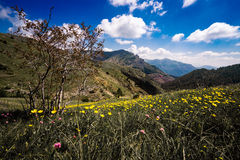 Buttercups and mountains Royalty Free Stock Photo