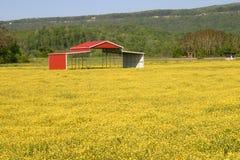 Buttercups & Pole Barn Stock Image
